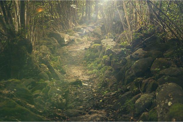 Caminos con corazón