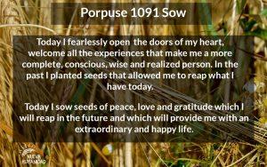 NH Porpuse 1091 Sow