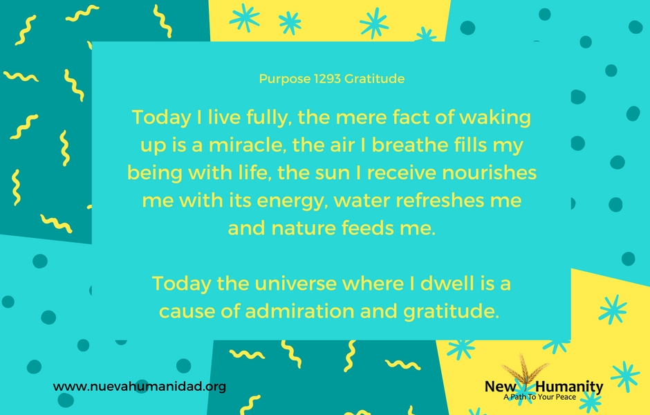 Purpose 1293 Gratitude