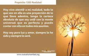 Propósito 1203 Realidad