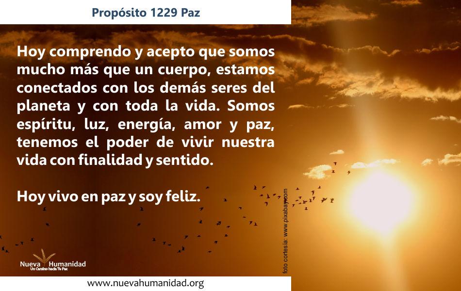 Propósito 1229 Paz