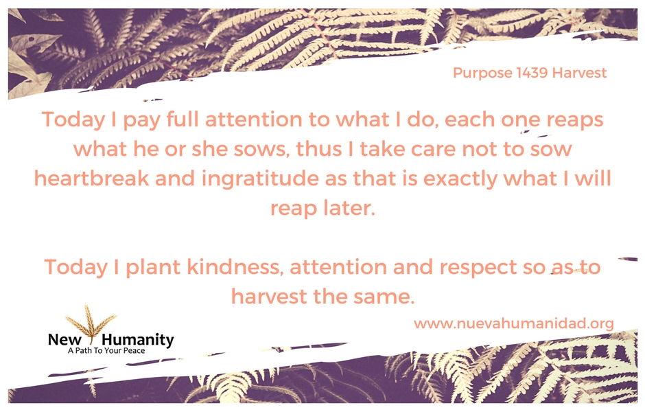 Nueva Humanidad Purpose 1439 Harvest