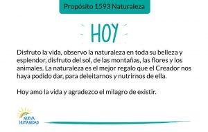Propósito 1593 Naturaleza