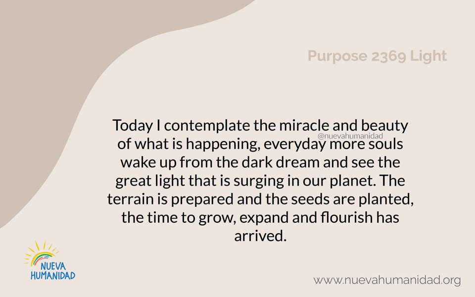 Purpose 2369 Light